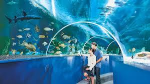 blue reef aquarium newquay cornwall guide