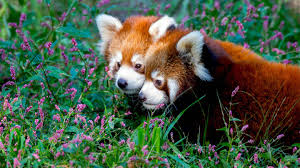 saving wildlife and wild places prospect park zoo