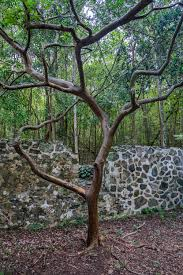 Cool Tree by Virgin Islands National Park U2014 The Greatest American Road Trip