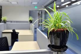 plantes bureau vie au bureau les plantes favorisent le bien être des salariés