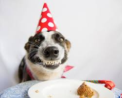 these 31 happy birthday dog images are so cute i u0027m wagging my