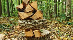 the best trees to plant for homegrown firewood stuff co nz