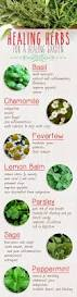 10 Vegetables U0026 Herbs You by 38 Best Herbs Images On Pinterest Gardening Plants And Herbs Garden
