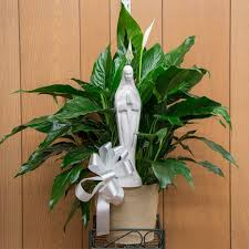 peace lilly peace with a madonna in dorchester ma the florist