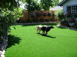 Can You Bury Animals In Your Backyard Best 25 Dog Friendly Garden Ideas On Pinterest Cat Garden Cat