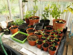 how to make a simple greenhouse automatic watering system hubpages