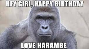 Happy Birthday Love Meme - hey girl happy birthday love harambe meme xyz