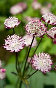 best 20 names of flowers ideas on pinterest white flowers names