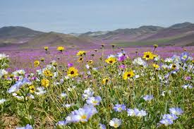 flowers san diego san diego senior flower outings 2017