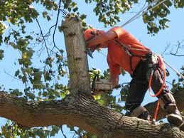 tree service in new york tree removal tree trimming stump grinding