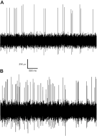 directional sound sensitivity in utricular afferents in the