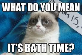 Mean Cat Memes - what do you mean cat meme cat planet cat planet