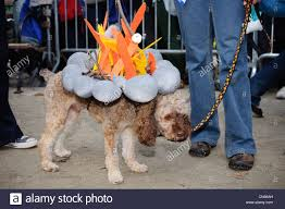 halloween new york city contestant campfire at the halloween dog parade in tompkins