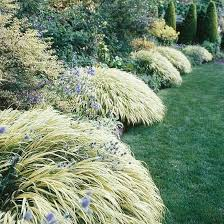 42 best ornamental grasses images on plants beautiful