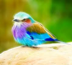 birds images Birds image bdfjade jpg