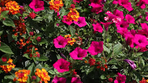heat loving plants bring on the heat with plants that love hot weather youtube