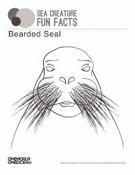 bearded seal one world one ocean