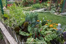 rosalind creasy garden images photobotanic stock photography