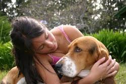 belgian shepherd how to train dog 101 how to train your dog