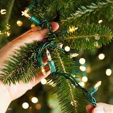 the best way to put lights on a tree rainforest