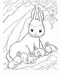 rabbits coloring pages baby rabbit sleep coloring kids