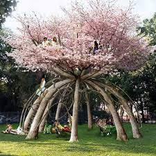 behold the ultimate tree house what the patient gardener