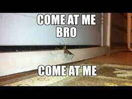 Come At Me Meme - praying mantis come at me bro come at me short insect meme