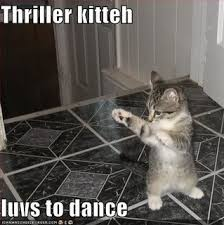 Lol Cat Meme - 10 internet memes that can still make you laugh technogog