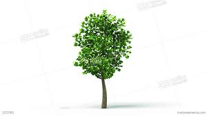 growing up tree animated background hd stock animation 2073760