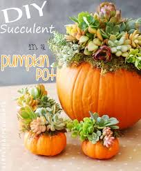 diy succulent in pumpkin pot top easy design project for