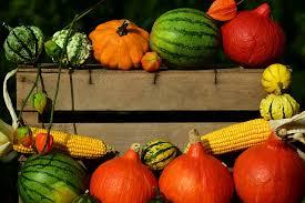 free photo pumpkin thanksgiving harvest free image on pixabay