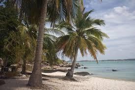 bawaka palm trees abc australian broadcasting corporation