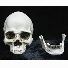 Skull Decor Aliexpress Com Buy Small Plastic Resin Halloween Skull