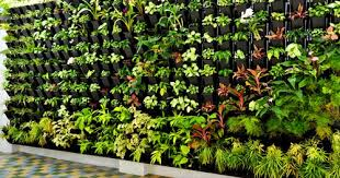 vertical gardens gardening solutions vertical garden service provider from kochi