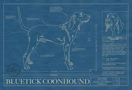 bluetick coonhound owners bluetick coonhound animal blueprint company