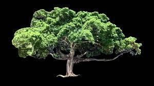 animated tree 11