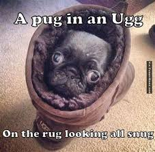 Funny Pug Memes - 8 funny pug memes what every pugs and cute animals pinterest