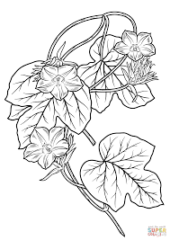 free printable morning glory flowers coloring pages printable for