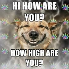 Stoned Dog Meme - stoner dog memes create meme