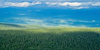 New Climate Zones For Russia by Russia U0027s Forests Overlooked In Climate Change Fight Scientists