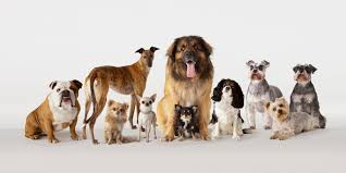 considering a pet friendly office here s what to expect huffpost