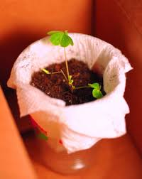 light and plant growth effect of artificial light on plant growth science project