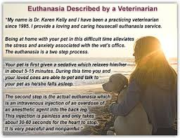 pet euthanasia at home dr dvm in home vet care euthanasia