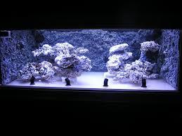 Live Rock Aquascaping Ideas Minimalist Aquascaping Idea U0027s Marine Aquariums South Africa
