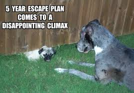 Disappointed Dog Meme - funny pug dog meme pun dog memes pinterest dog dog memes and