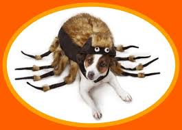 Dog Spider Halloween Costume Dog Costumes Large Dogs Dog Bunker