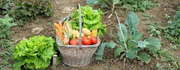 gwinnett county public library fall vegetable gardening workshop
