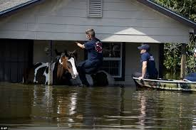 Texas how far can a horse travel in a day images Pictures how toxic brown flood water has ravaged texas daily jpg