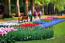 beautiful garden of colorful flowers in spring keukenhof in the
