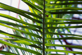 Plants That Need No Light Understanding Natural Light For Houseplants